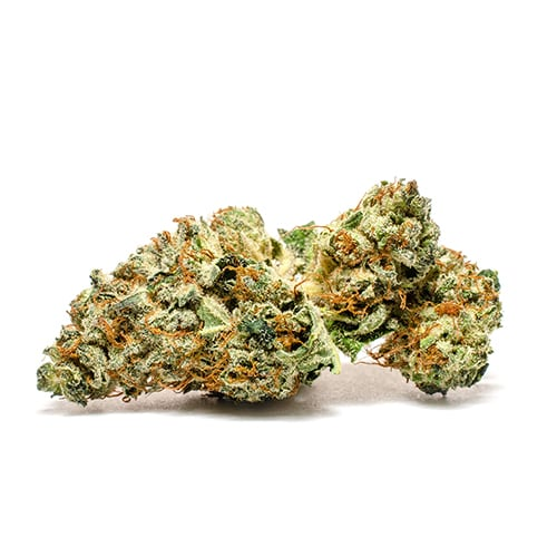 Daily Special Indica