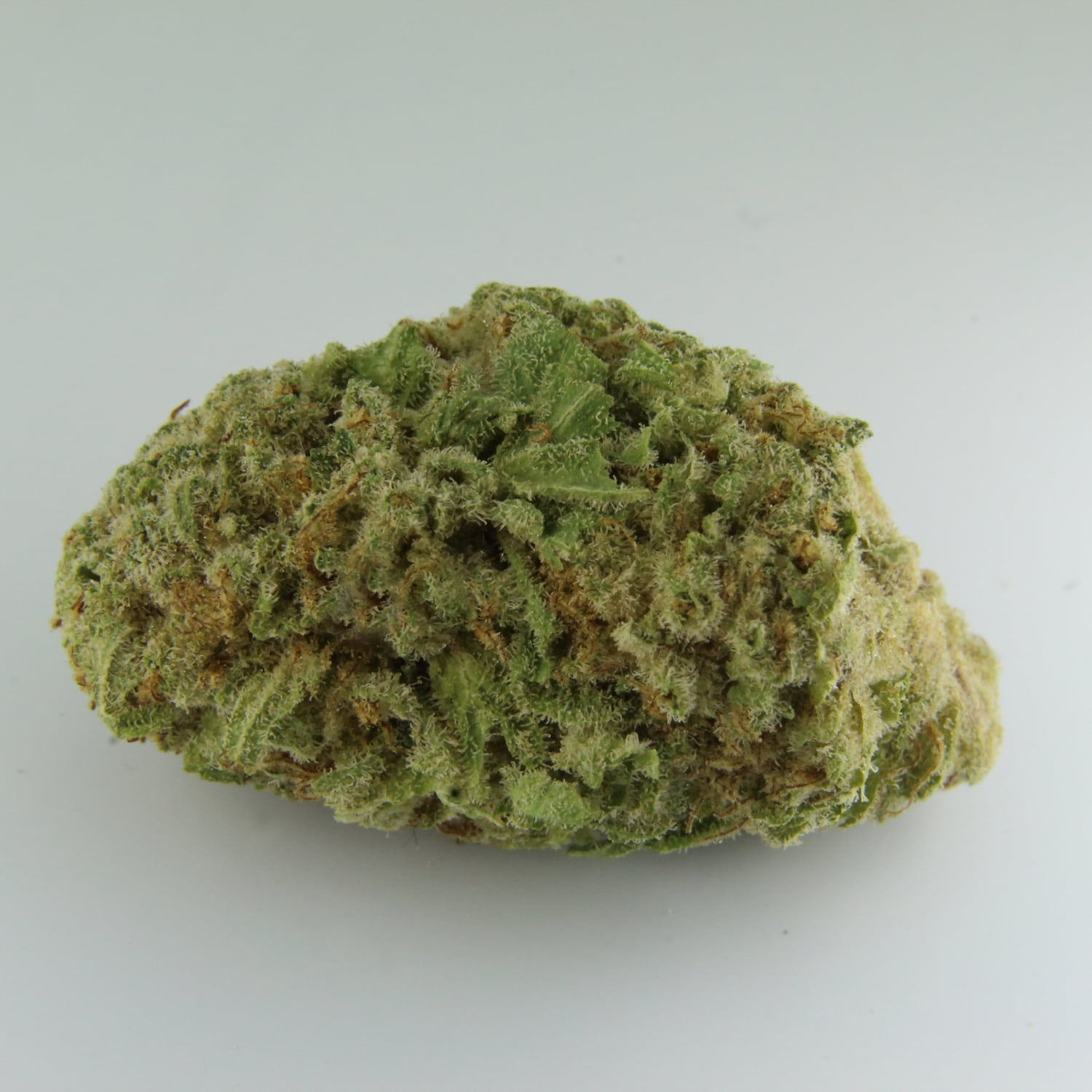 White Shark Sativa Hybrid